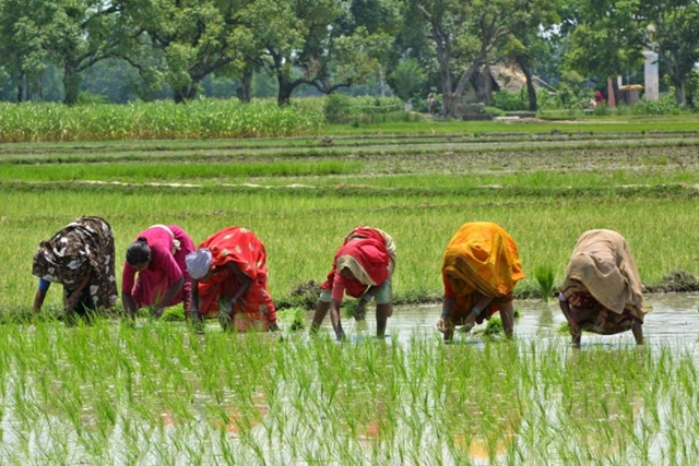 participation of rural women in income Household food security and raise the income of the farmer by providing direct  ii analyse the level of rural women participation in the gess programmeand.