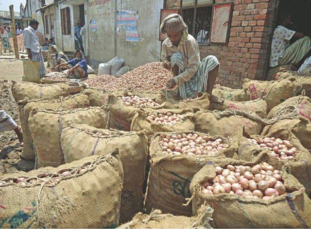 Bumper onion yield fails to make growers happy