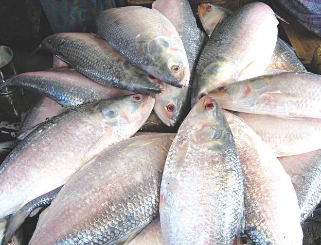 Hilsa output in Barisal up by 22pc in three years