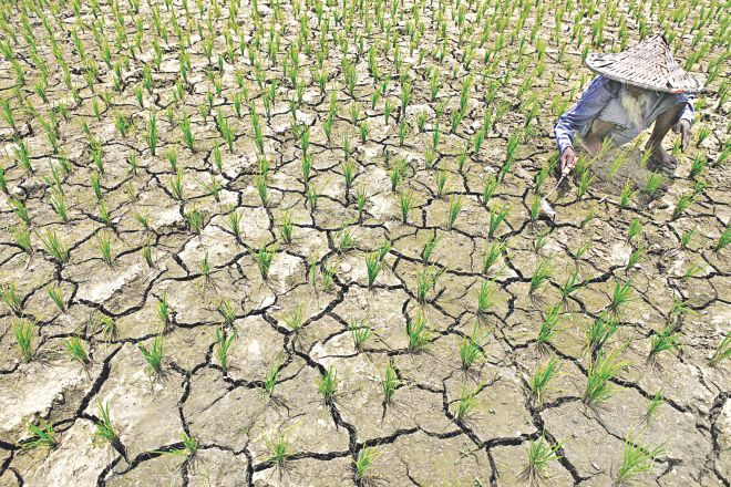 Lack of rain dries up a paddy field at Balia Bhekutia in Jessore at a time of the year when the crops are usually seen in ankle-deep water. The situation in the area remains almost unchanged since this photo was taken earlier this month.  Photo: Rashed Shumon