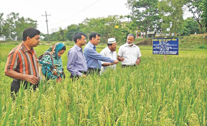 Md Alamgir Hossain, Principal Scientific Officer at the plant breeding division of the Bangladesh Rice Research Institute (BRRI), right, along with a number of other breeders and agriculture extension workers inspects a trial field of zinc-enriched rice in Habiganj. The rice variety is expected to get approval tomorrow. Photo: Courtesy of BRRI